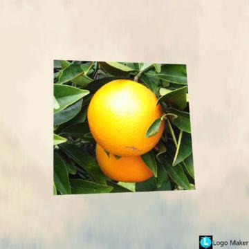 Opg Golemac - voće i povrće