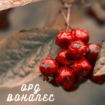 OPG Bohanec