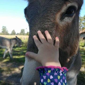 OPG Trnak magareće mlijeko